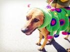 A caterpillar at Dogtoberfest Austin, Tx.