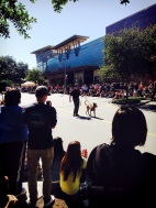 police K9 demonstration at Dogtoberfest Austin, Tx.