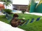 Sunbathing in Puerto Vallarta